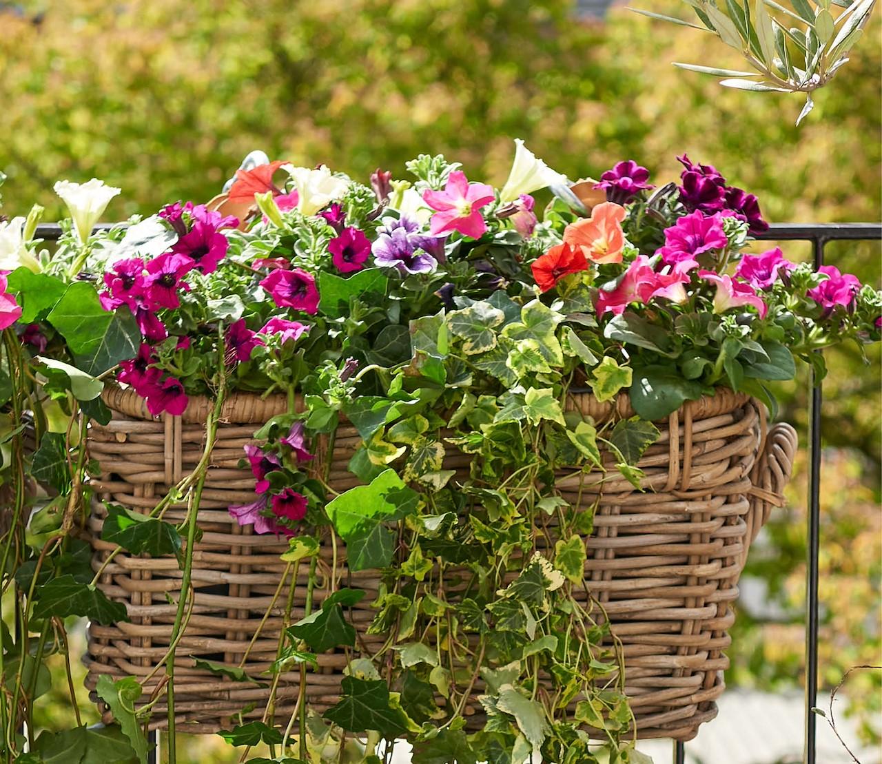 Petunia's: easy care en lang genieten!
