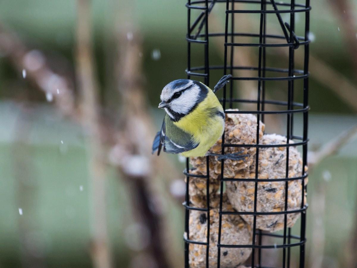 Help de vogeltjes de winter door! Wie eet wat?