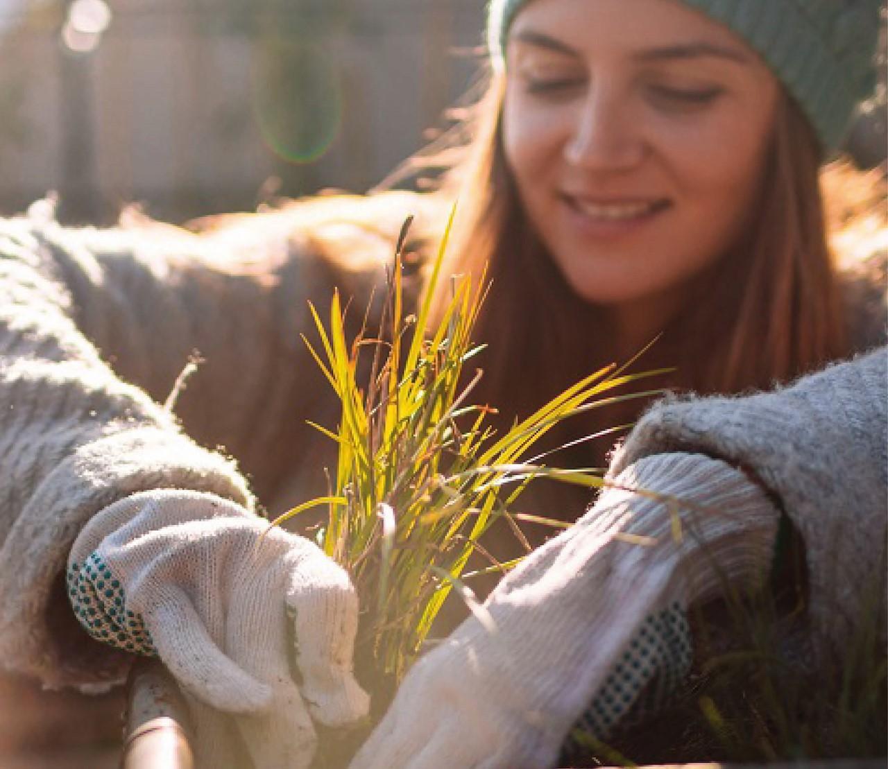 Deze populaire planten kan je ook in de winter planten