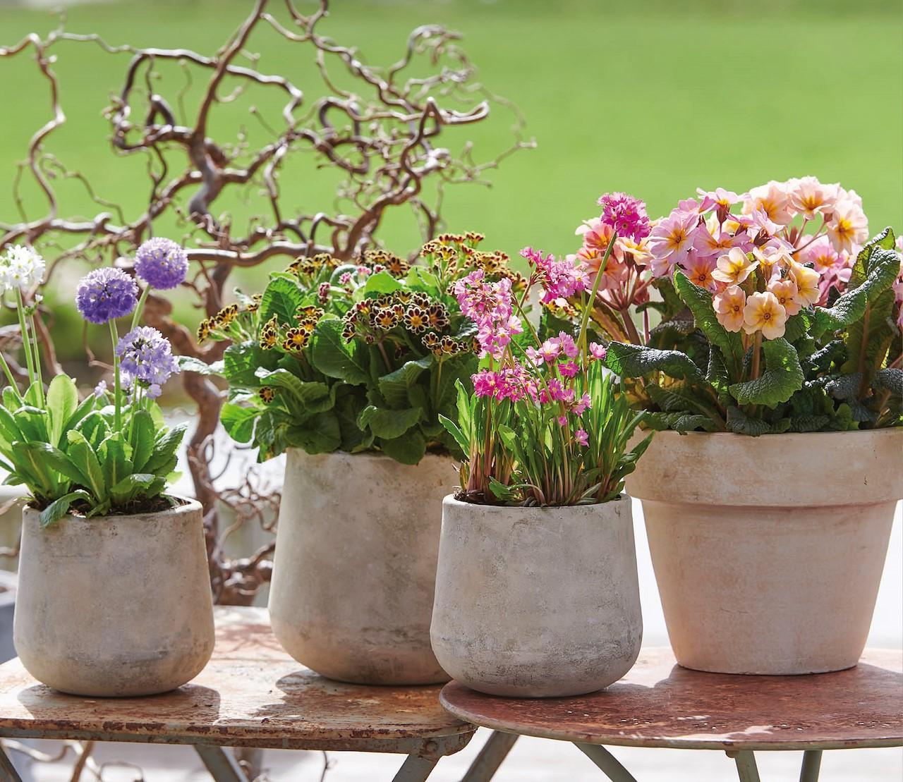 Voorjaarsverrassingen in de tuin