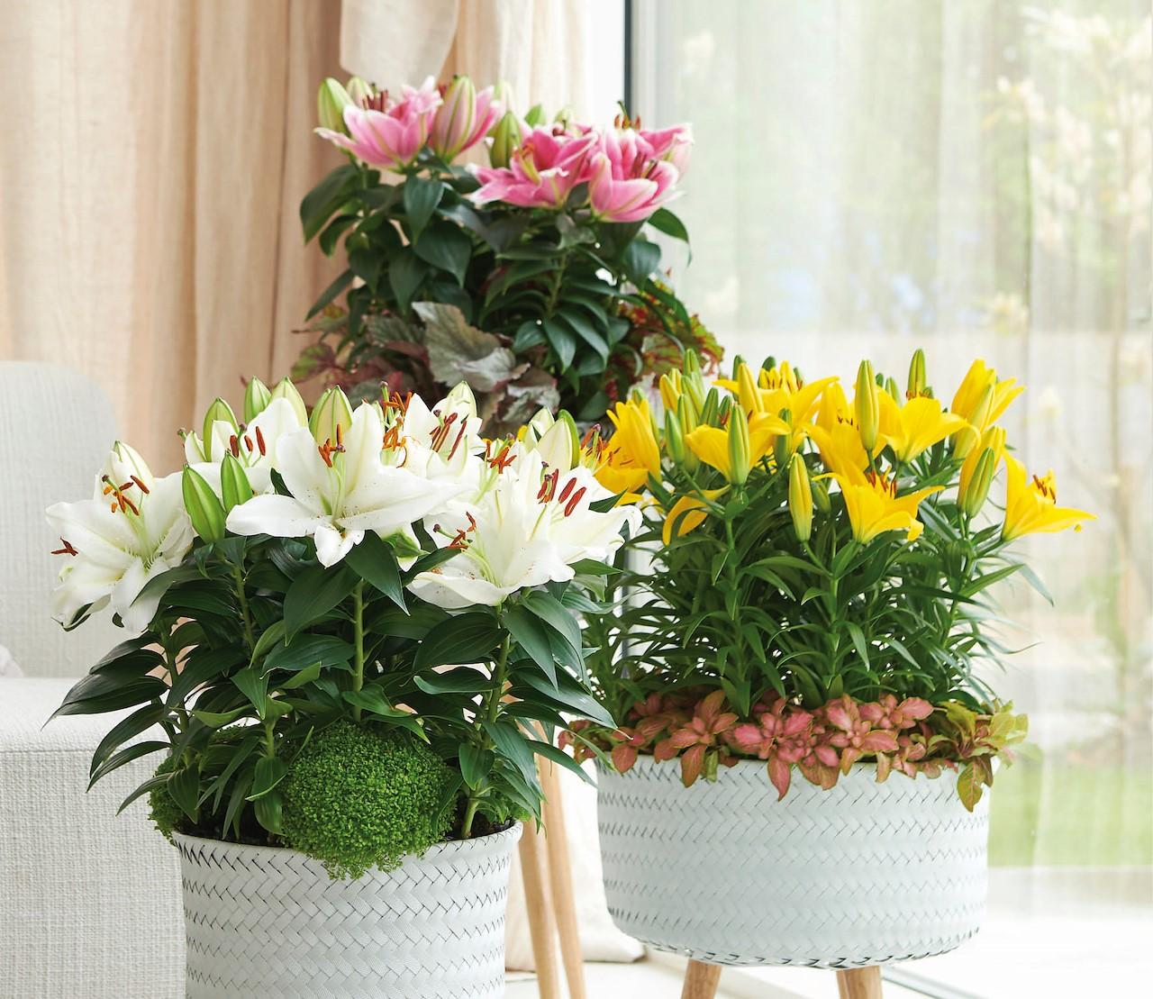 Sprookjesbloemen in huis met potlelies