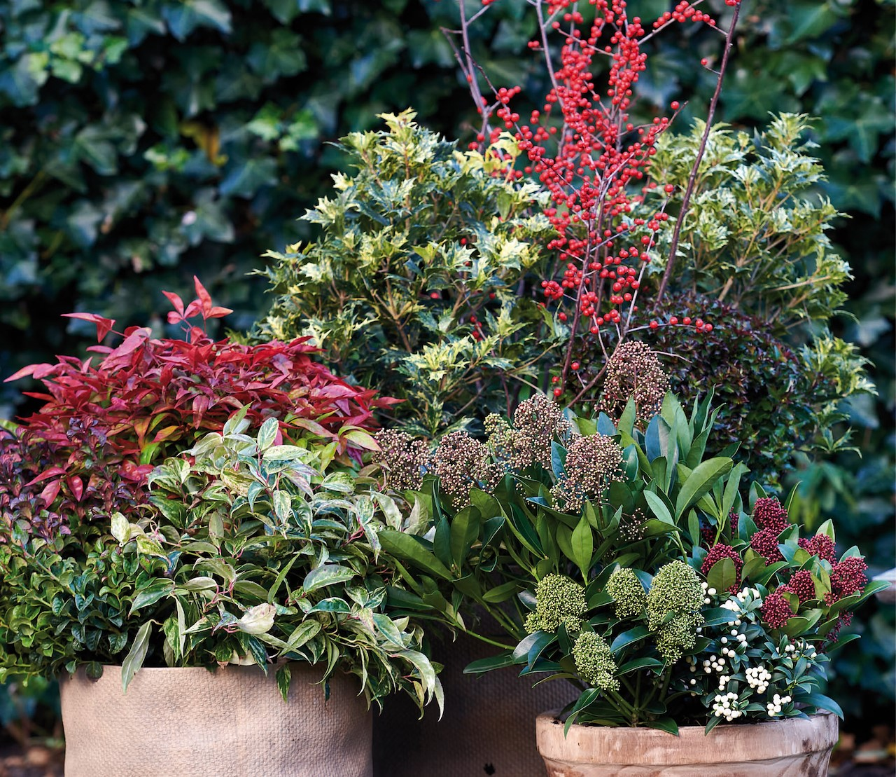 Rode planten om het najaar kleur te geven
