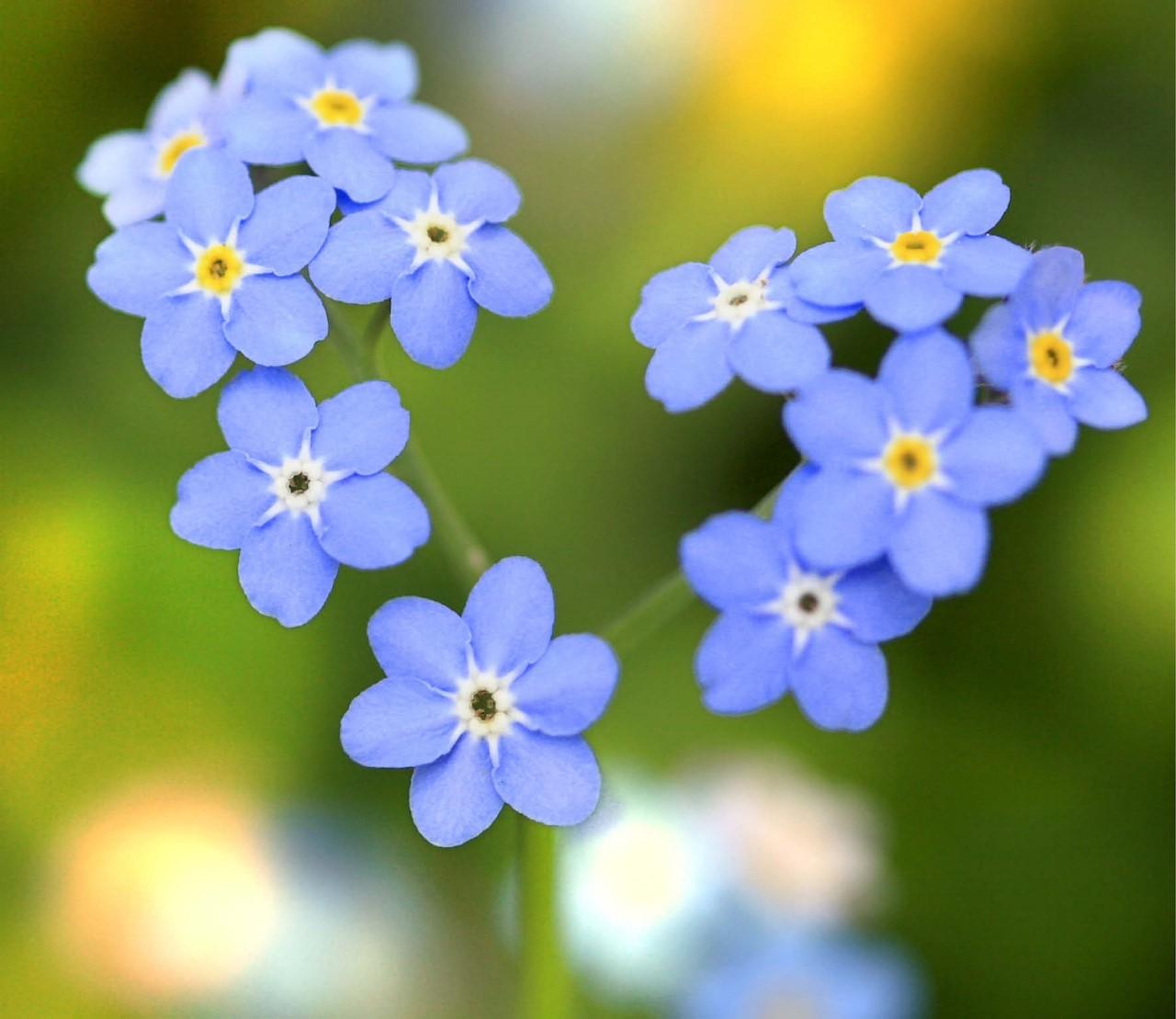 Een origineel cadeau? 5 romantische planten