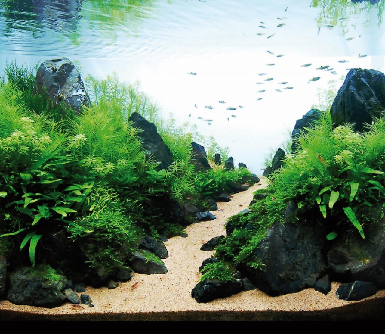 Aquarium inrichten? Dit zijn de populairste stijlen