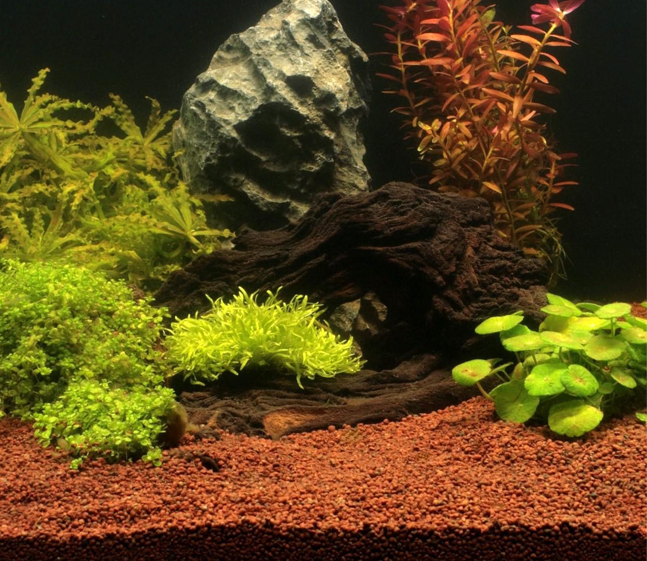 Een aquarium met weinig planten? Kies voor een substraatbodem.