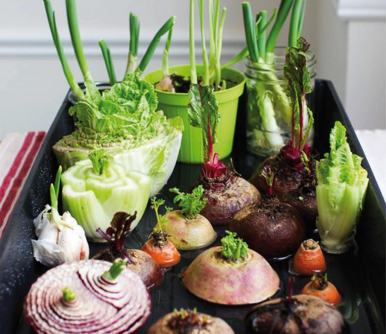 Kruiden & groenten die je kan laten terug groeien uit restjes