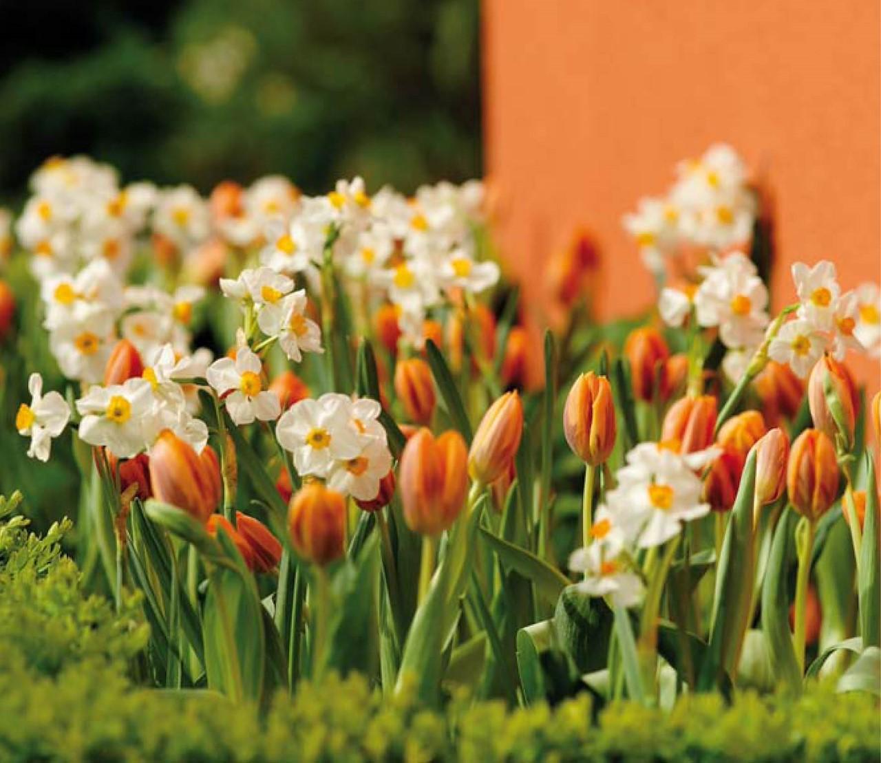Tulpen en narcissen? Meer dan rood en geel!