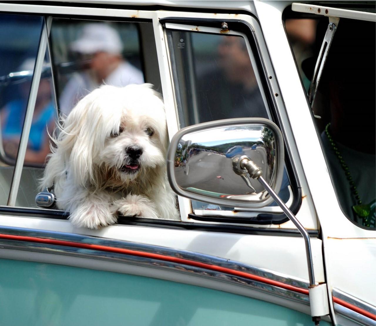 Je huisdier mee in de auto