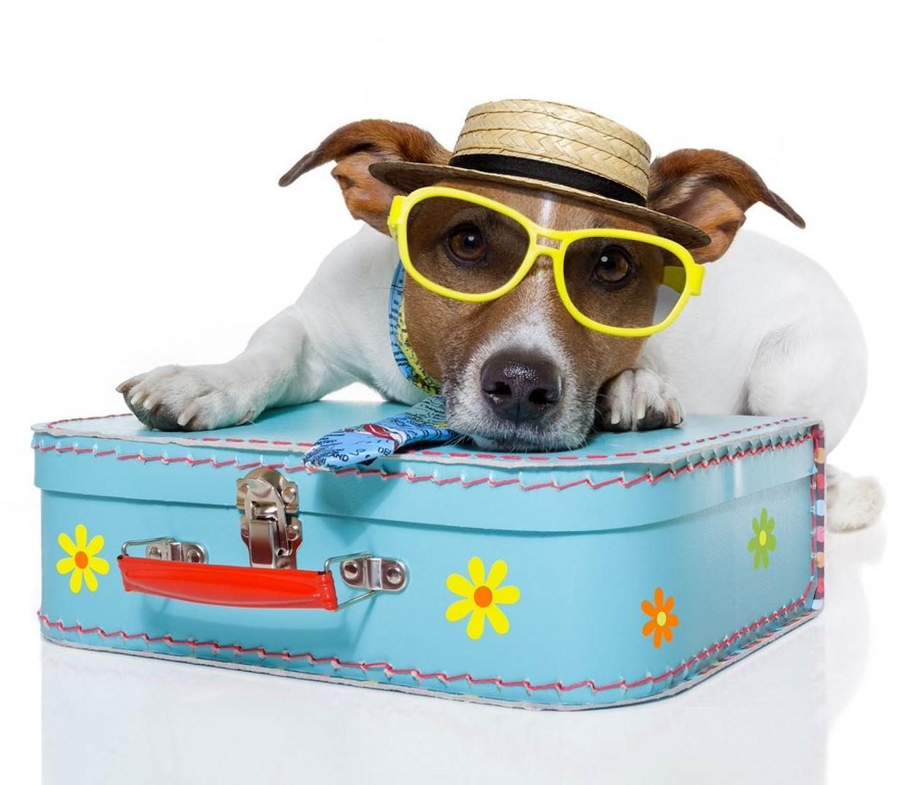 Je huisdier mee op reis, of niet?