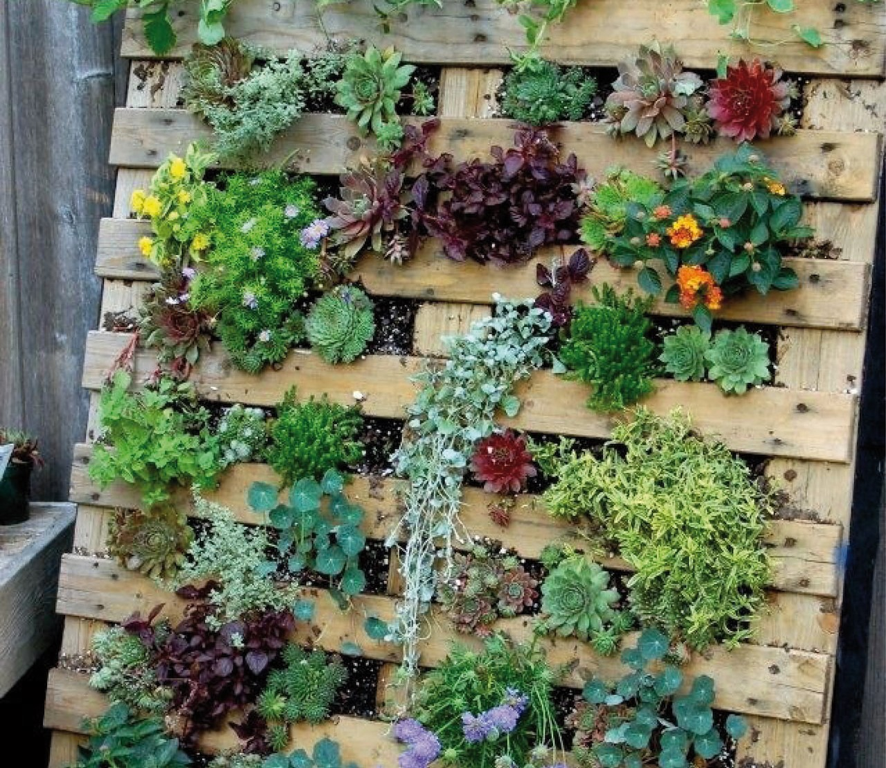 DIY: je eigen verticale tuintje