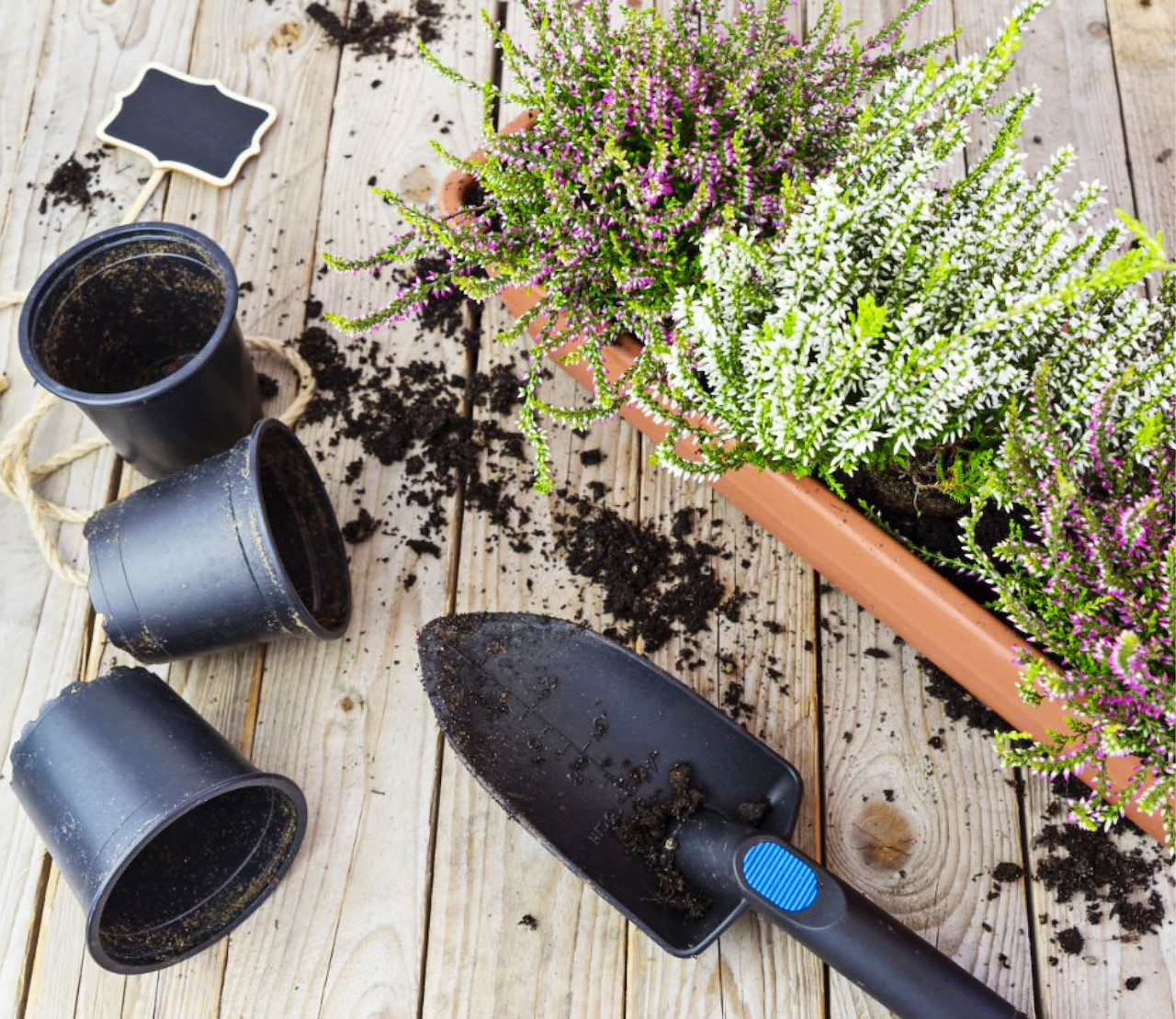 Hoe je best heide plant, verzorgt en snoeit