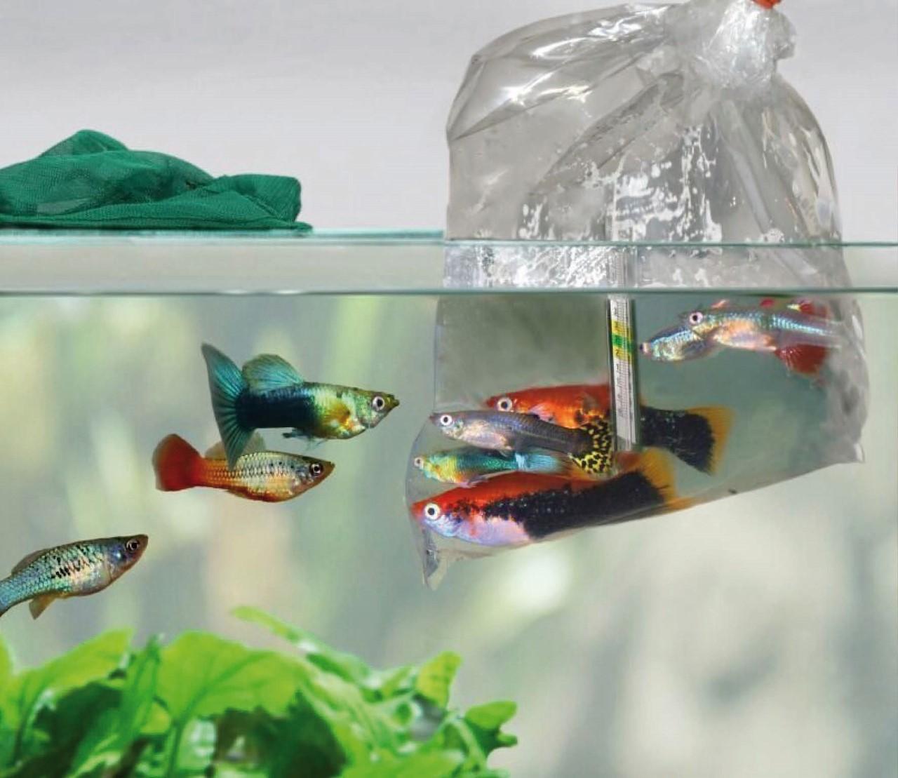 Hoe moet ik nieuwe vissen overzetten op mijn aquarium?