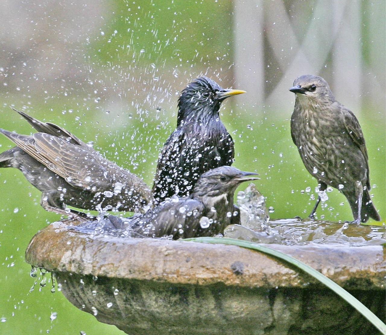 Help de vogels de hitte door!