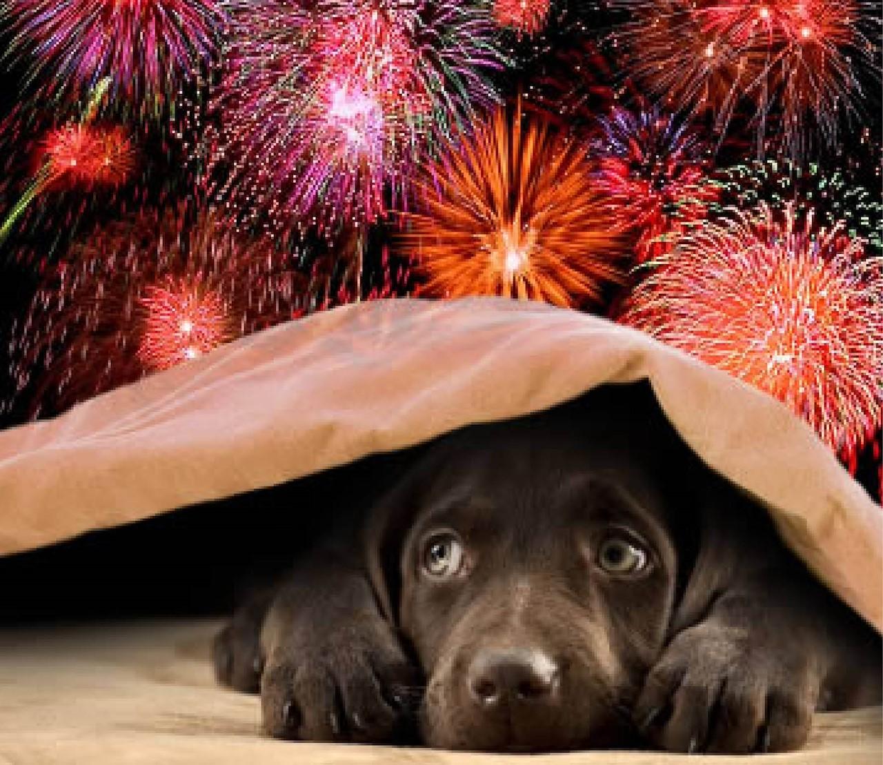 Vuurwerk & huisdieren? 7 tips