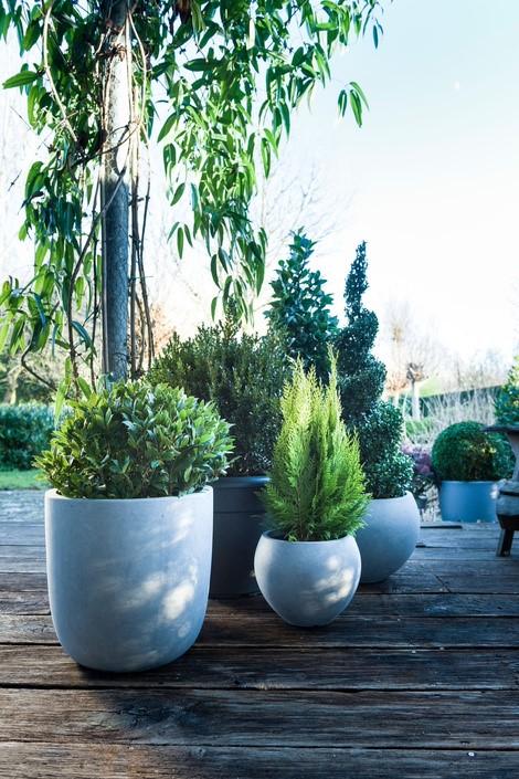 Kerstplanten voor binnen of buiten