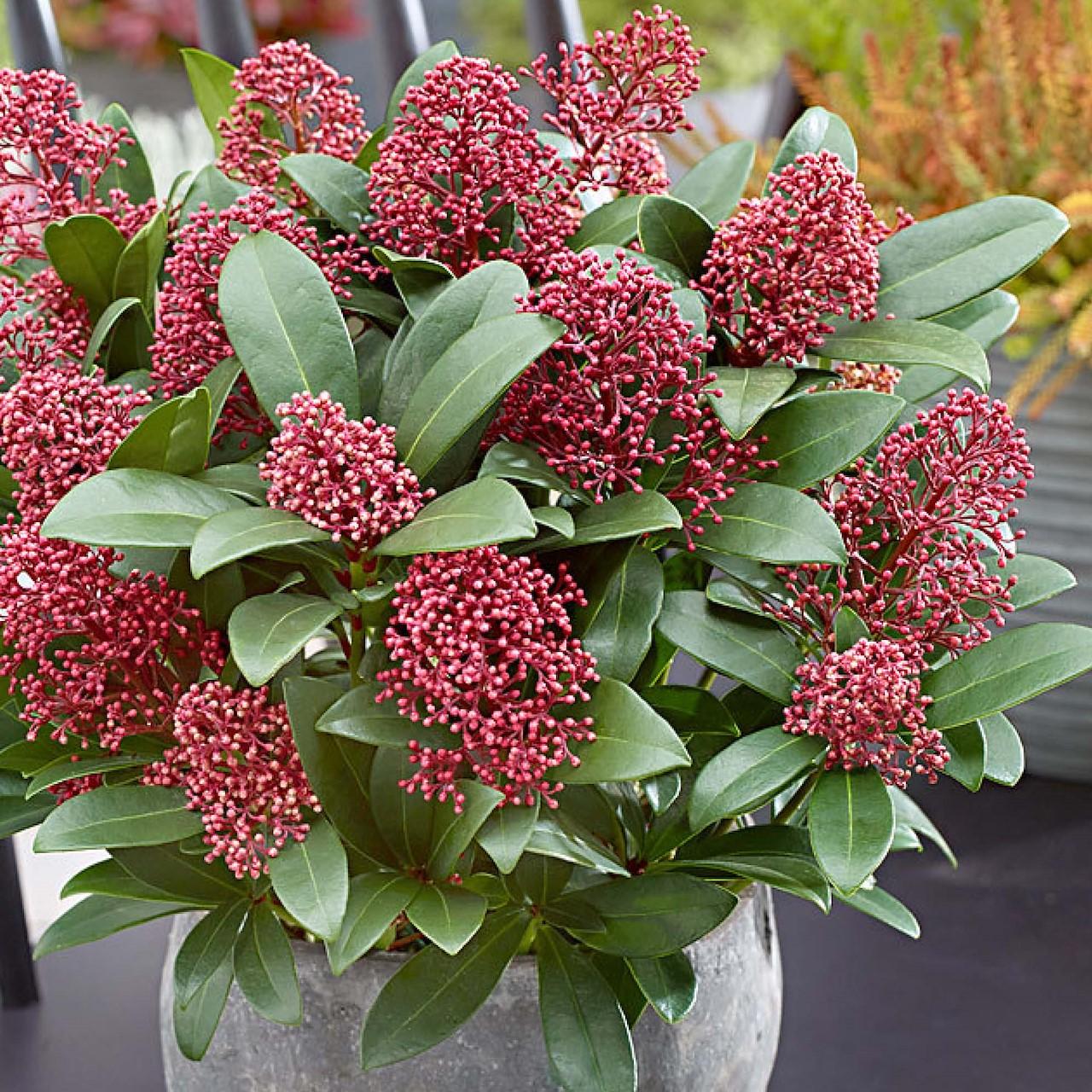 top 6 kleurrijke winterplanten
