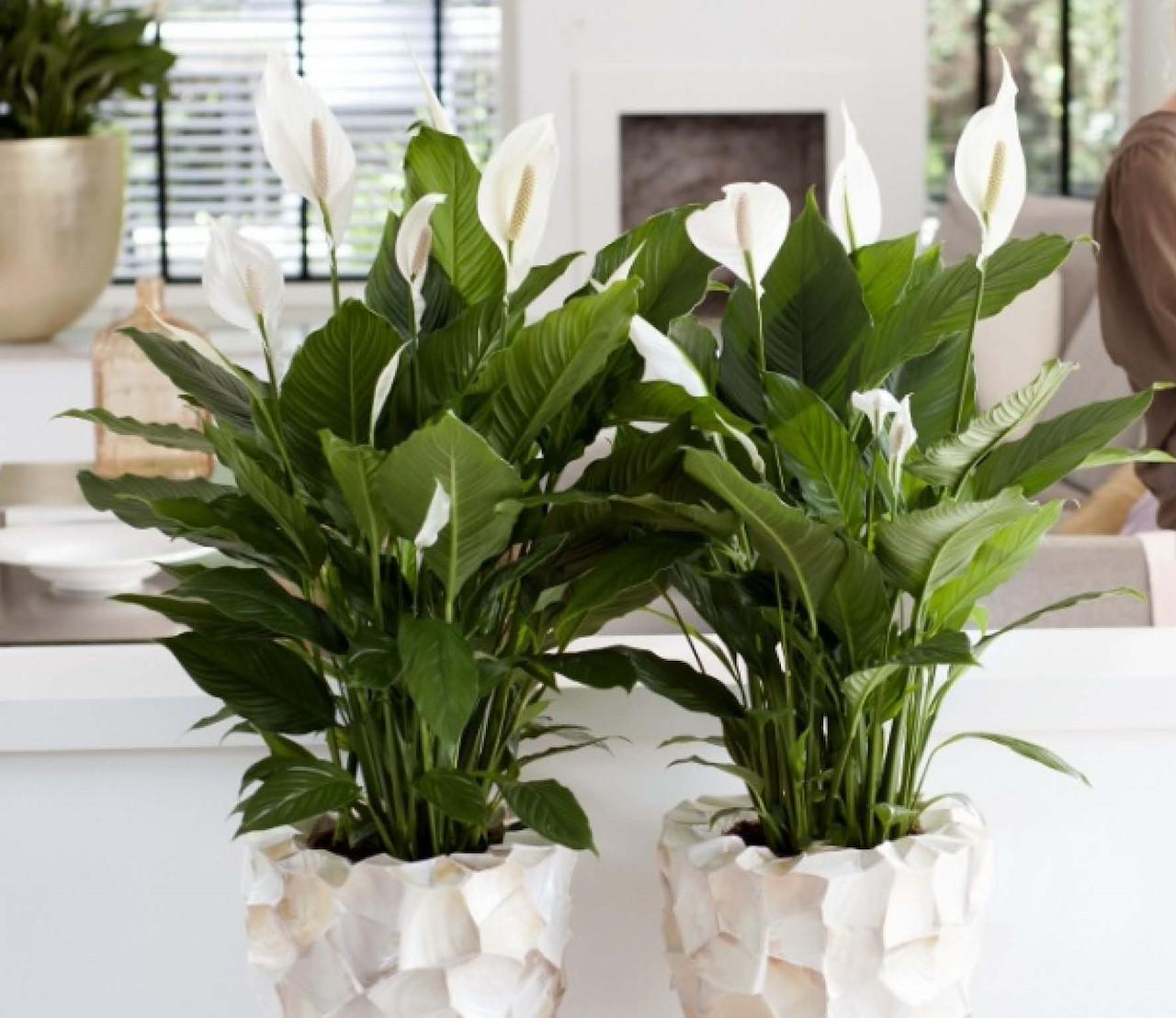 5 kamerplanten als luchtreiniger
