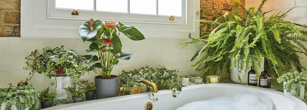 Planten Voor In De Badkamer.De Leukste Planten Voor In De Badkamer Tuincentrum Pelckmans