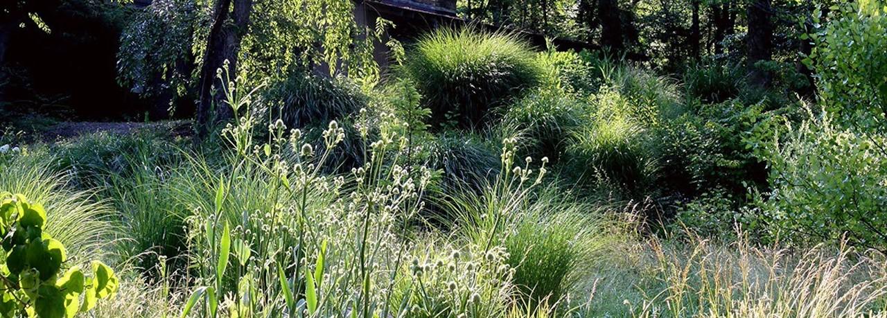 Planten Voor In De Schaduw.De Mooiste Siergrassen Voor De Schaduw Tuincentrum Pelckmans