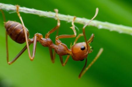 Aaltjes tegen de mieren