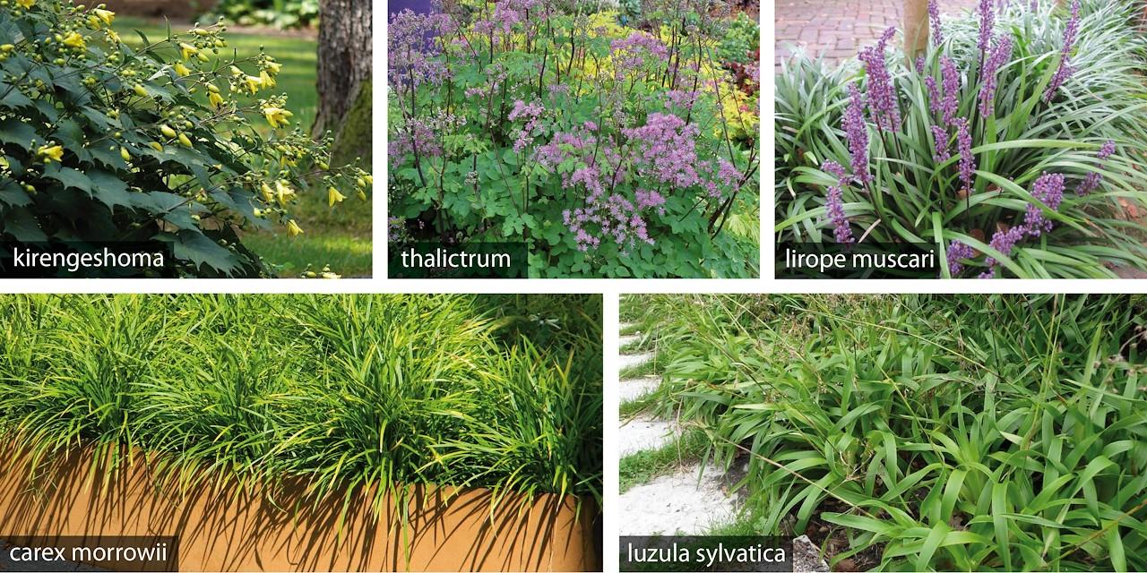 Verrassend Schaduw lastig? Niet voor deze planten! - Tuincentrum Pelckmans VQ-75