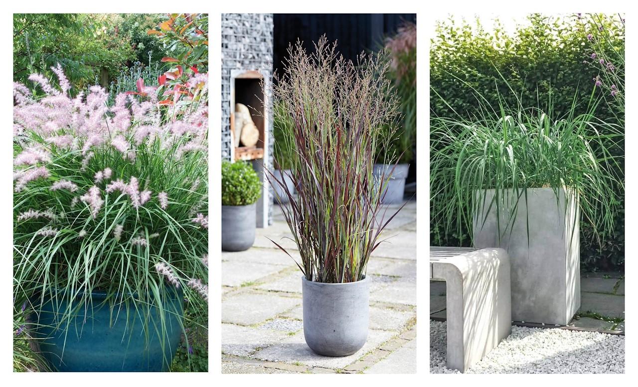 Grassen In Pot.Siergrassen In Pot Hoe Doe Ik Dat Tuincentrum Pelckmans
