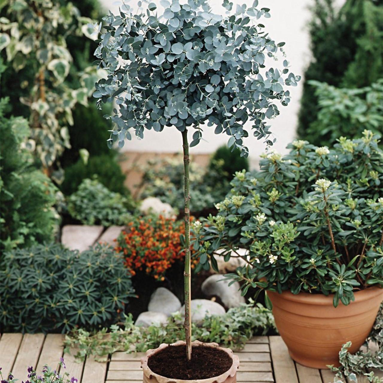 Boom In Pot Tuin.Bomen Die Altijd Groen Blijven Tuincentrum Pelckmans