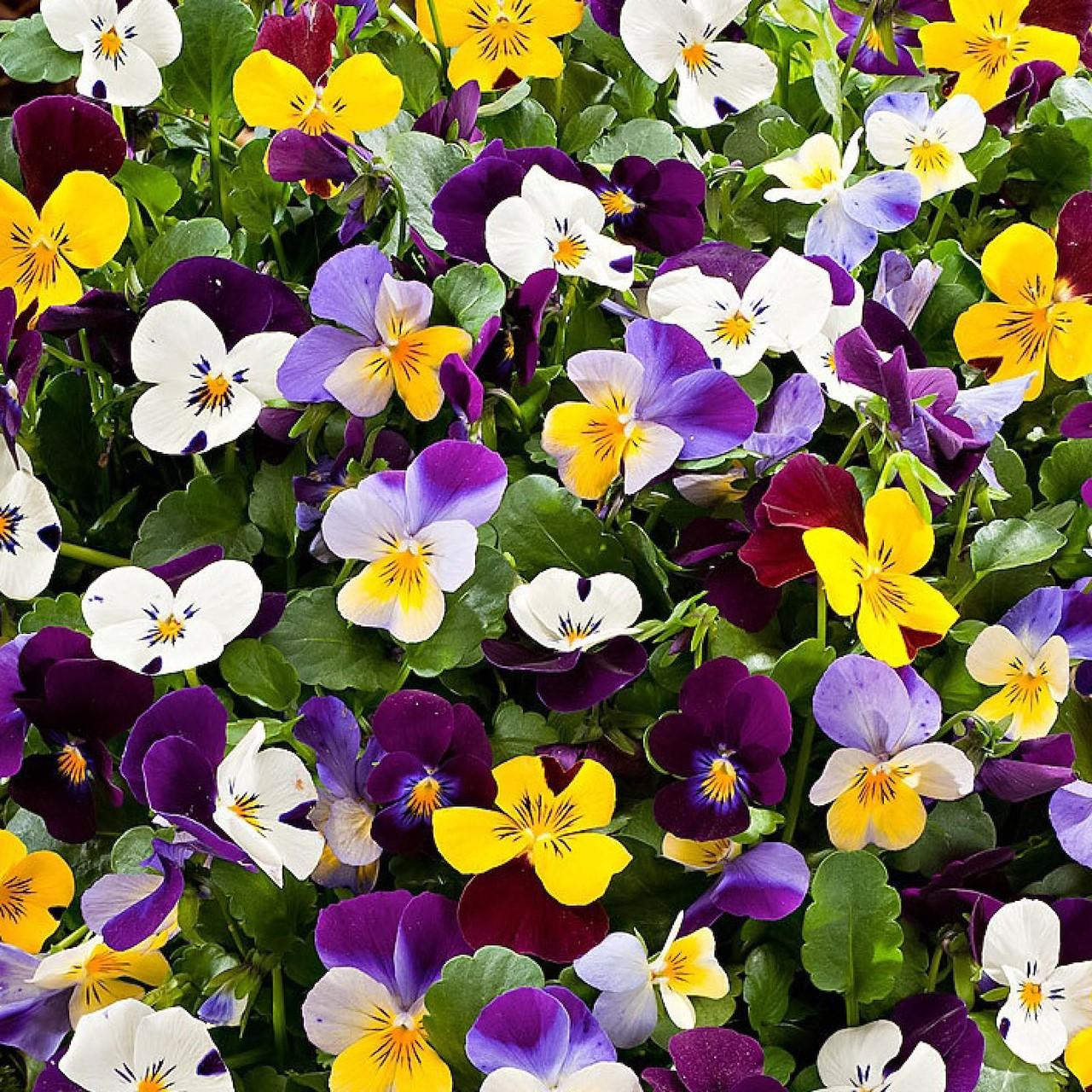 Winter Planten Voor Buiten.Top 6 Kleurrijke Winterplanten Tuincentrum Pelckmans