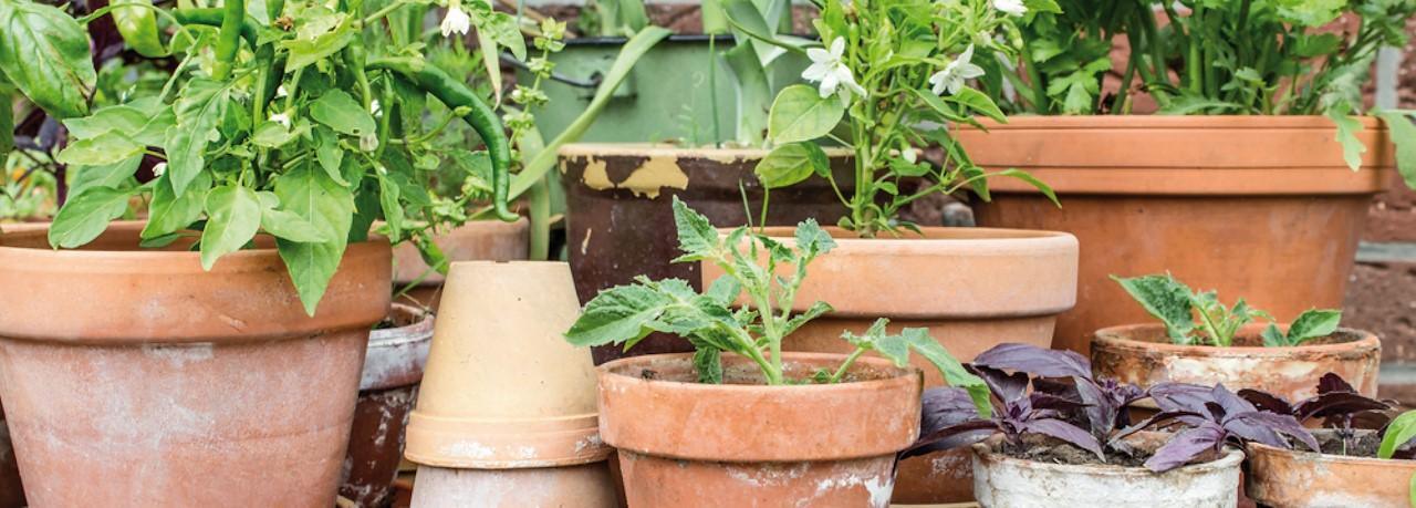 Boom In Pot Op Balkon.Moestuinieren In Pot Tuincentrum Pelckmans